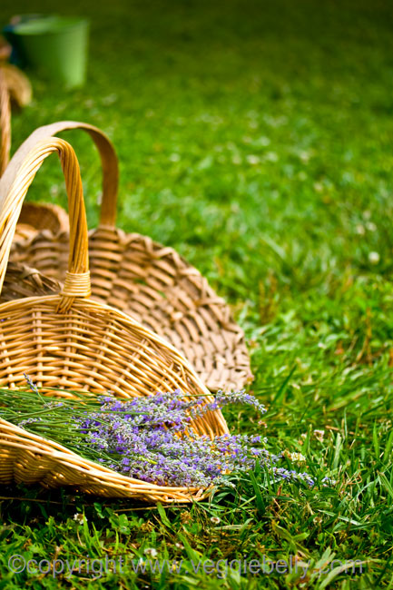 lavender in baskets