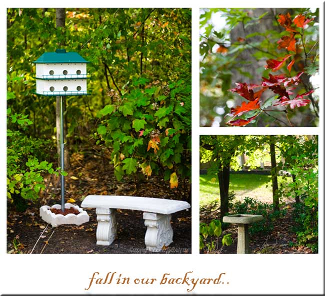 bench-bird-house-and-bird-bath